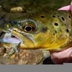 Dry Fly Eater
